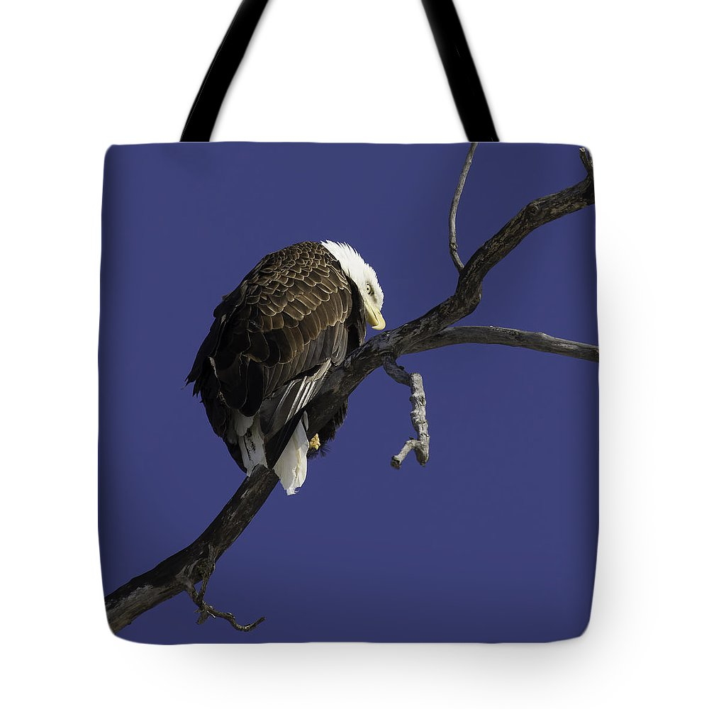 American Adult Bald Eagle Tote Bag featuring the photograph American Bald Eagle 1 by Thomas Young