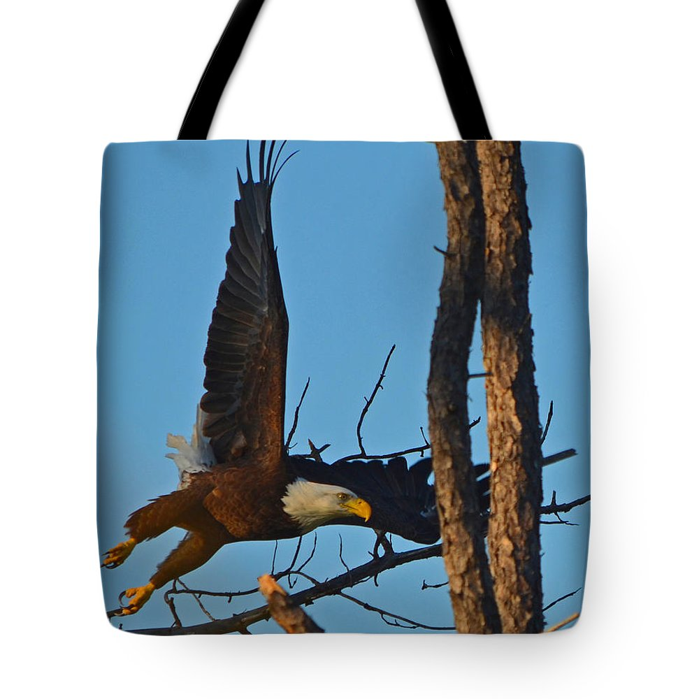 American Bald Eagle Tote Bag featuring the photograph American Bald Eagle I Mlo by Mark Olshefski