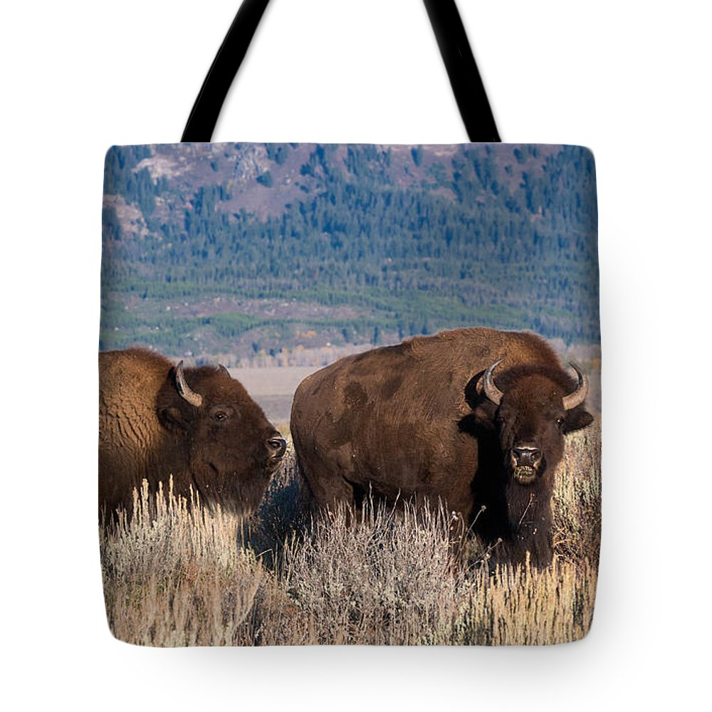 Bison Tote Bag featuring the photograph American Bison Trio by Kathleen Bishop