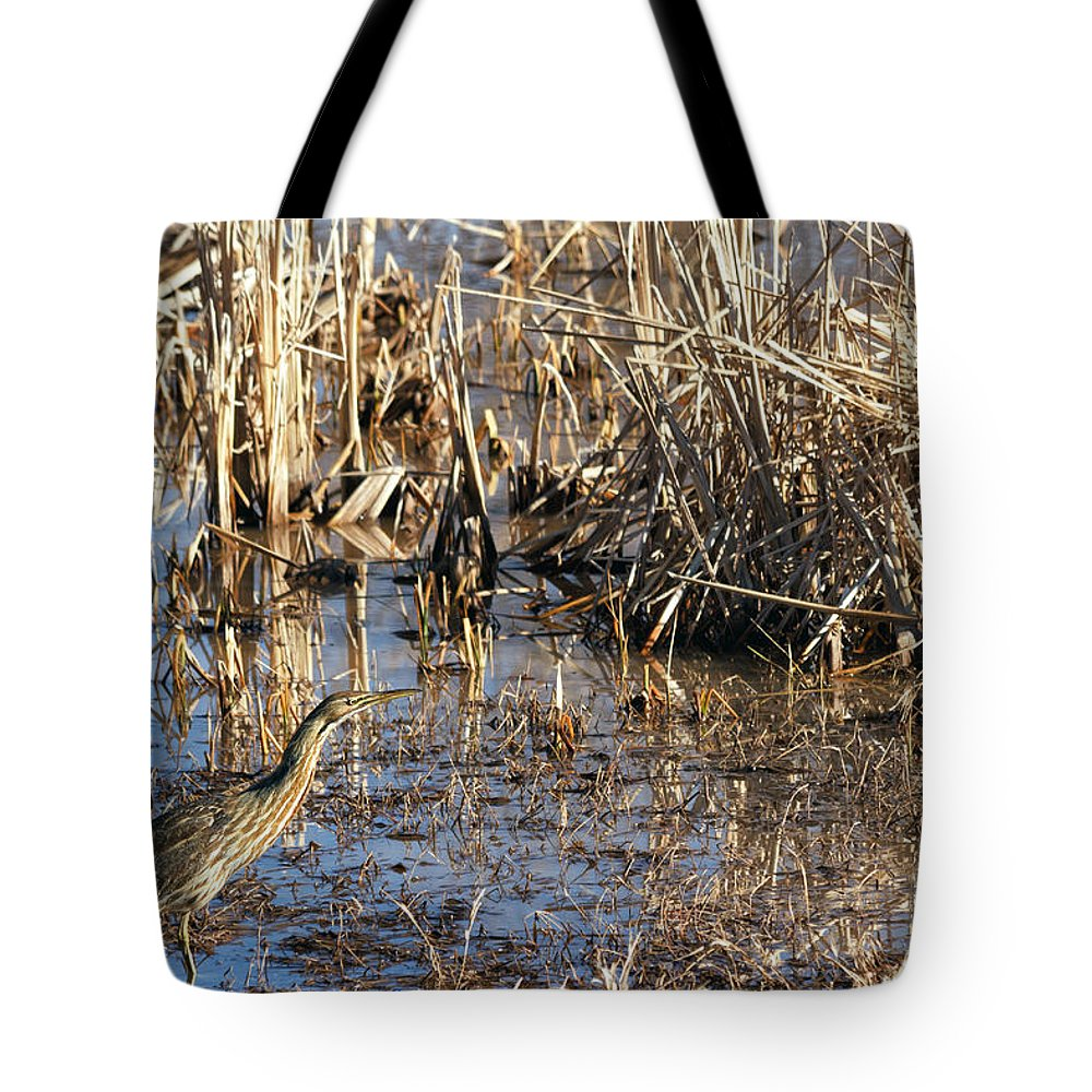 American Bittern Tote Bag featuring the photograph American Bittern by Kathleen Bishop
