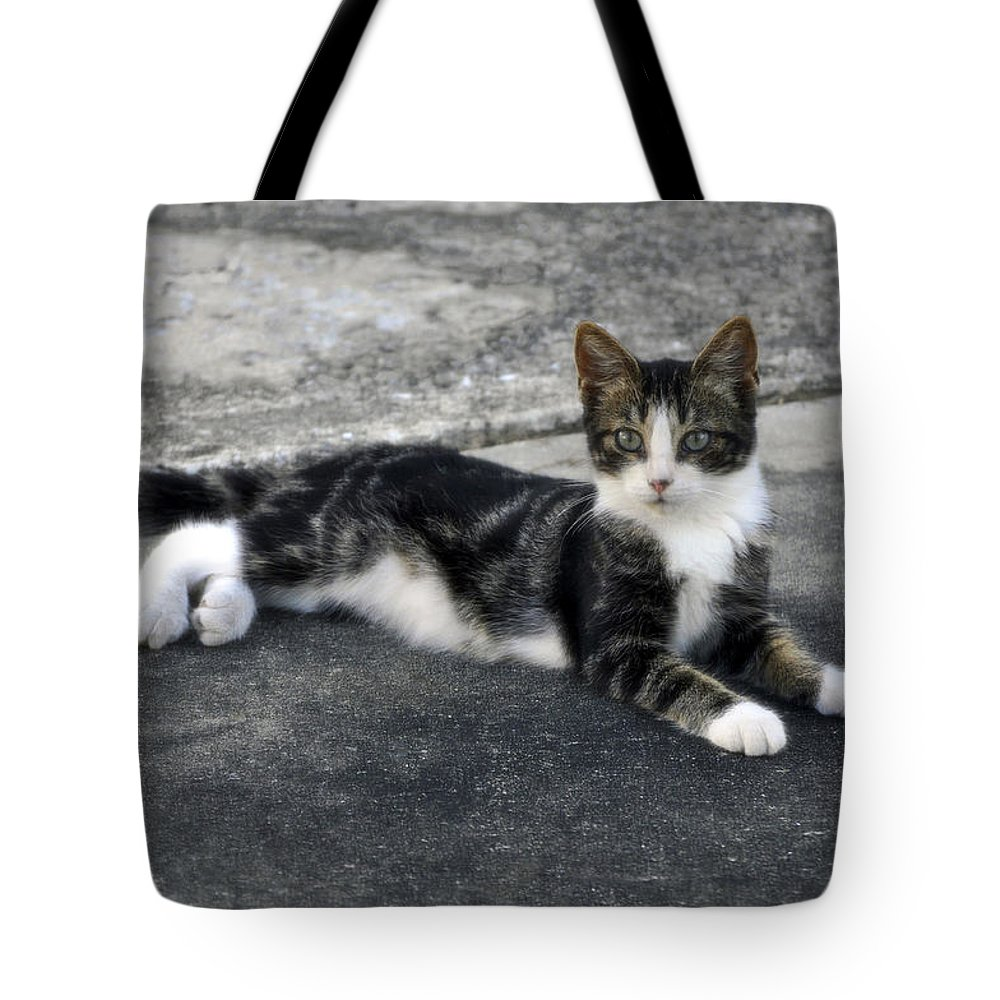 Horizontal Tote Bag featuring the photograph American Grey Tiger Stripe Kitten Portrait by Sally Rockefeller
