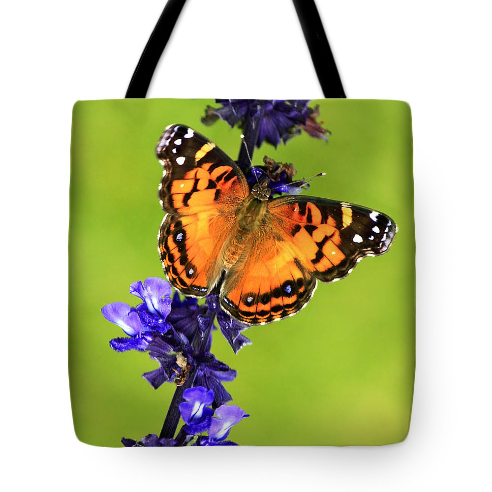American Lady Tote Bag featuring the photograph American Lady Butterfly by Carolyn Derstine