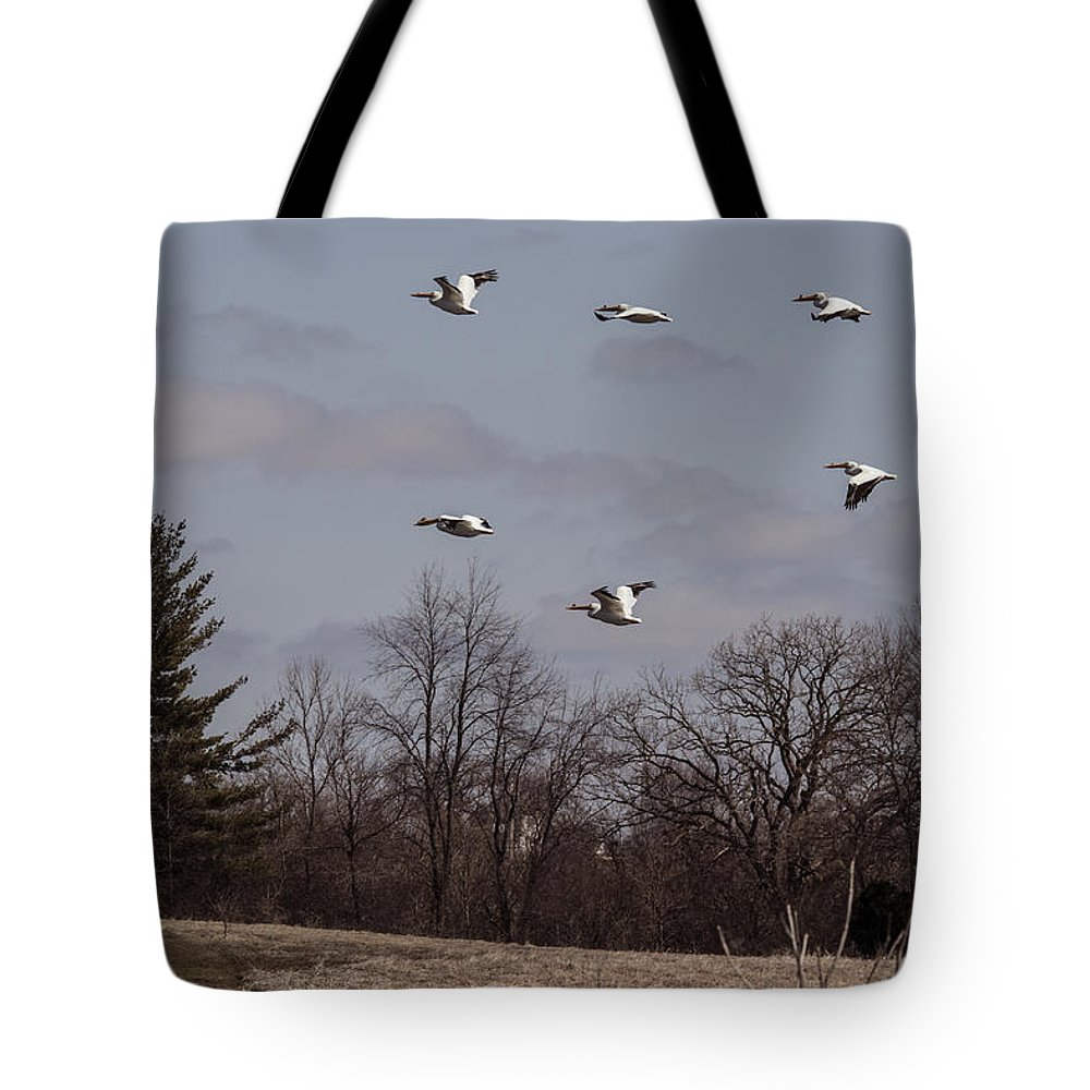 American Pelican Tote Bag featuring the photograph American Pelican Fly-over by Jayne Gohr