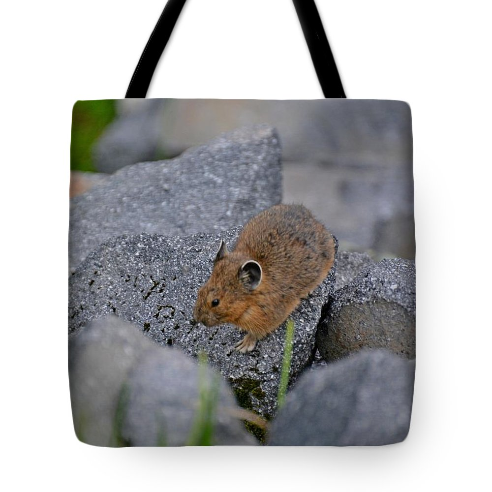 Pika Tote Bag featuring the photograph American Pika by Lena Photo Art