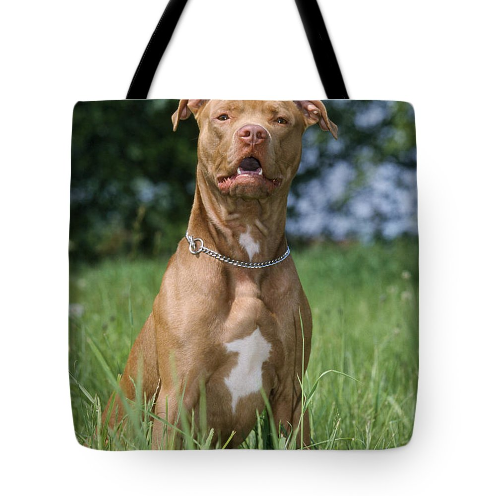 American Pit Bull Terrier Tote Bag featuring the photograph American Pit Bull Terrier by Johan De Meester