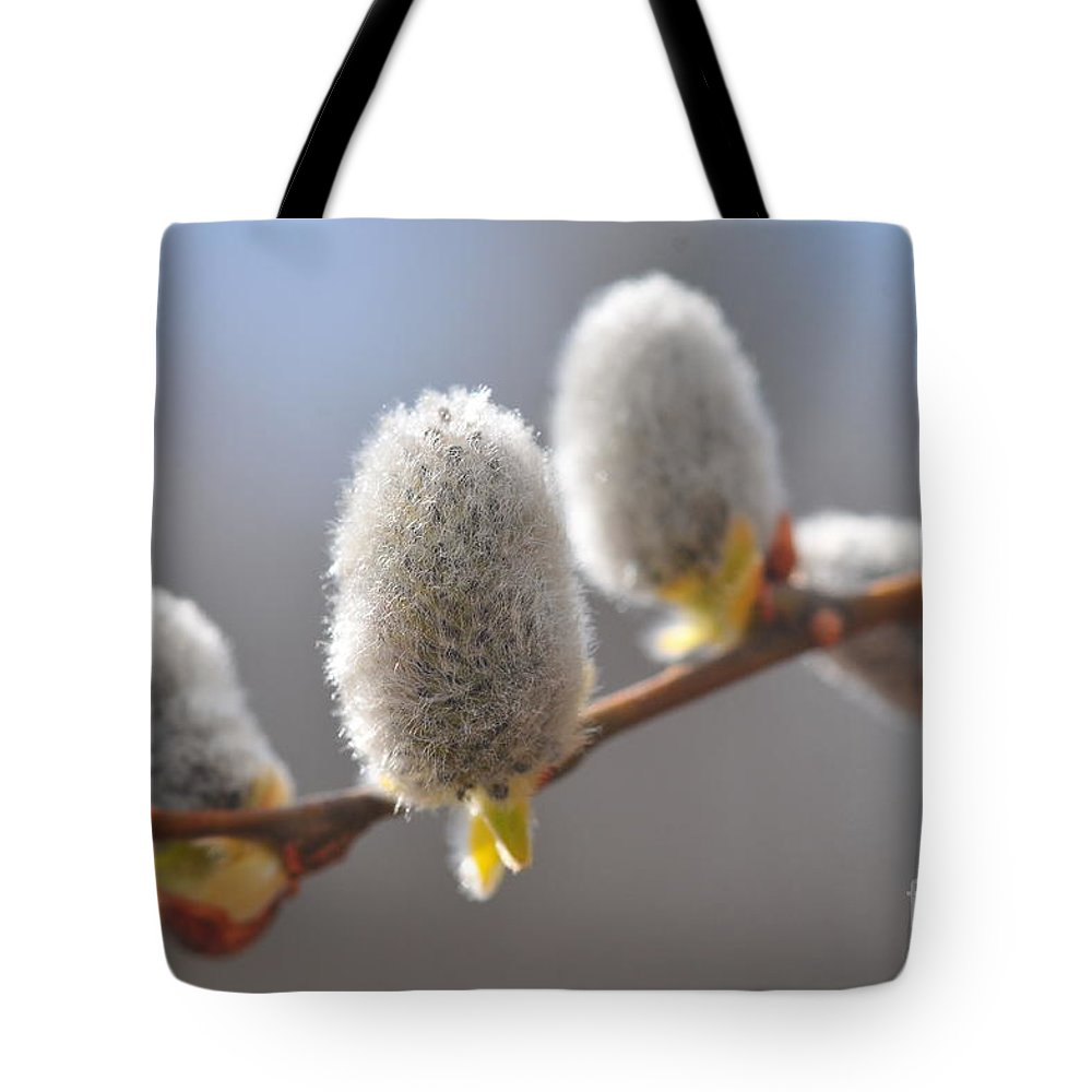 Spring Tote Bag featuring the photograph American Pussy Willow by Catherine Reusch Daley