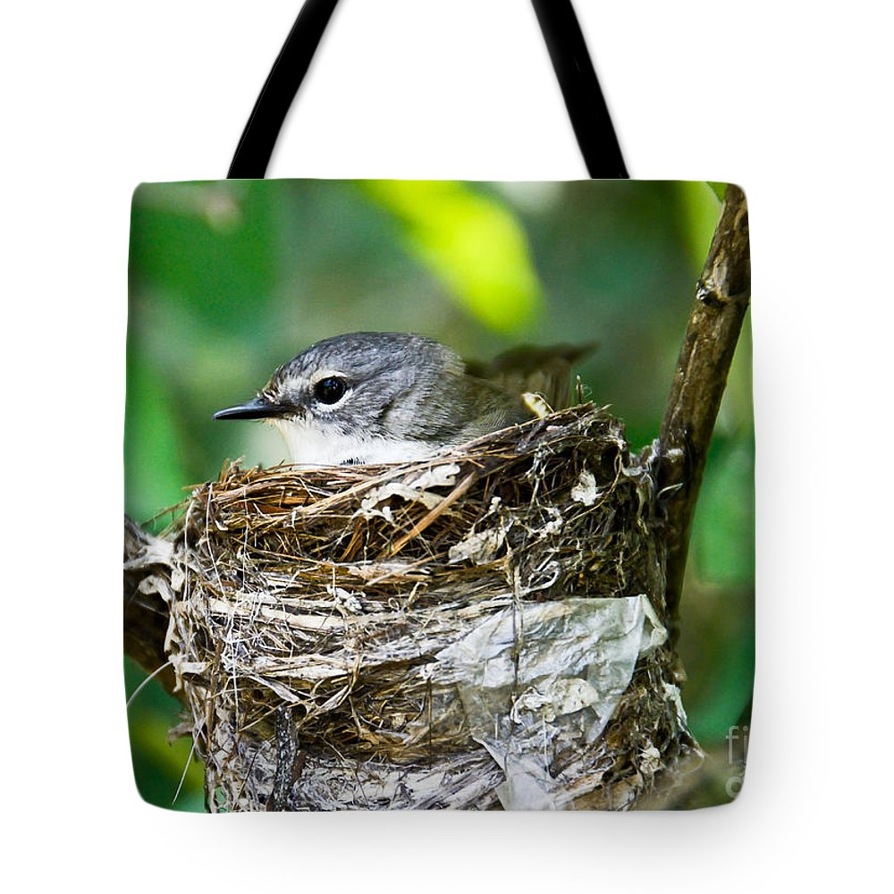 New Life Tote Bag featuring the photograph American Redstart Nest by Cheryl Baxter