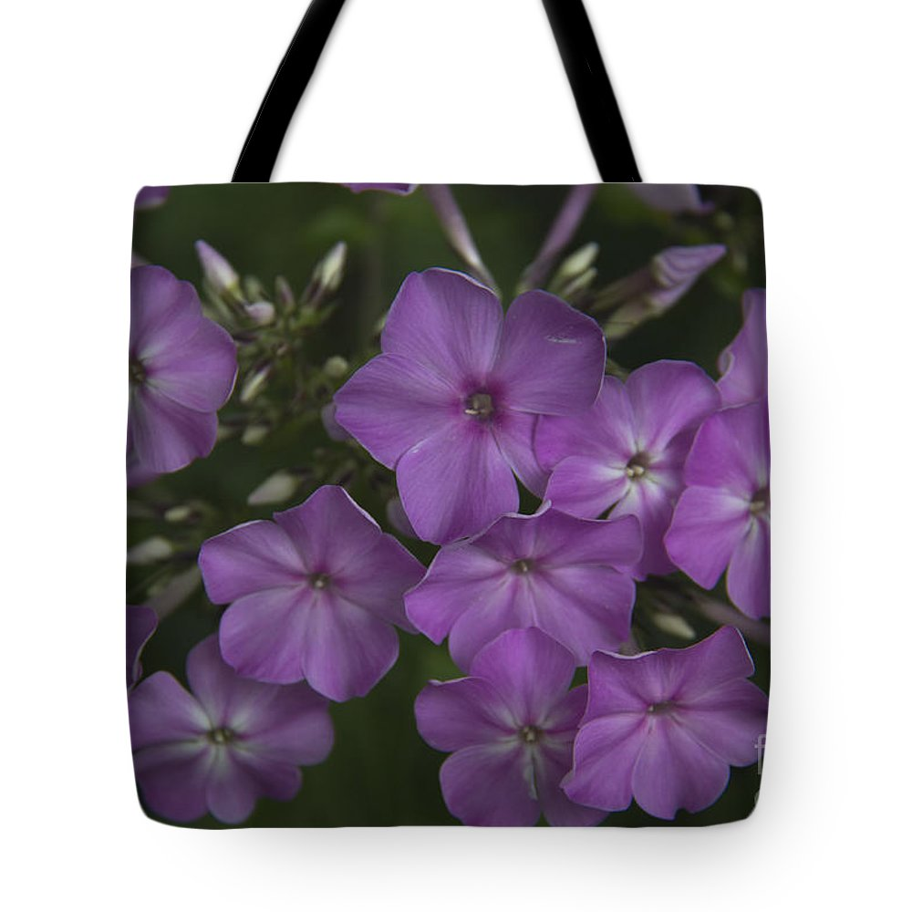 Phlox Tote Bag featuring the photograph Amethyst Phlox by Teresa Mucha