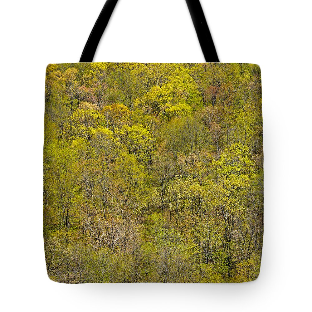 Trees Tote Bag featuring the photograph Among The Trees by Karol Livote