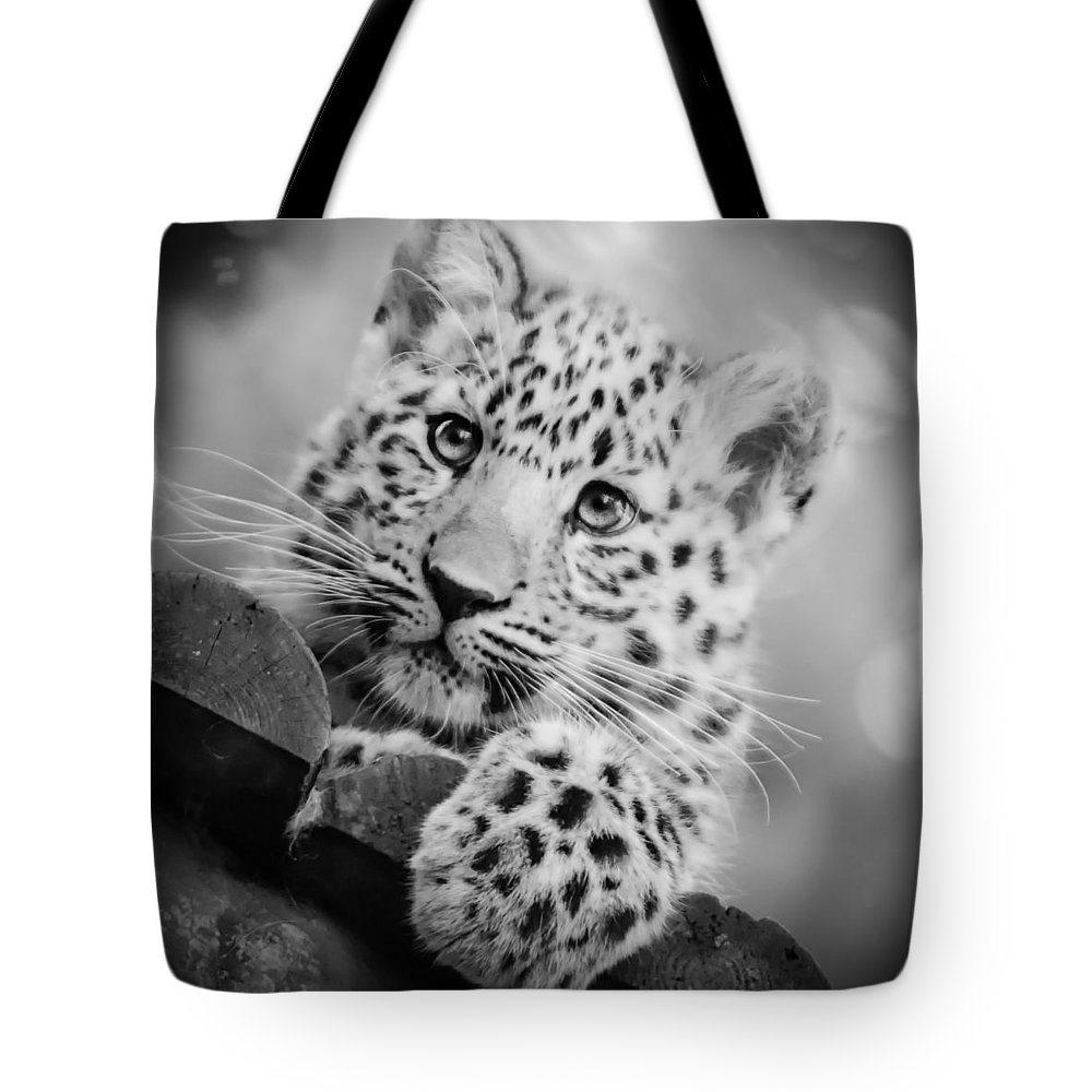 Amur Tote Bag featuring the photograph Amur Leopard Cub Portrait by Chris Boulton