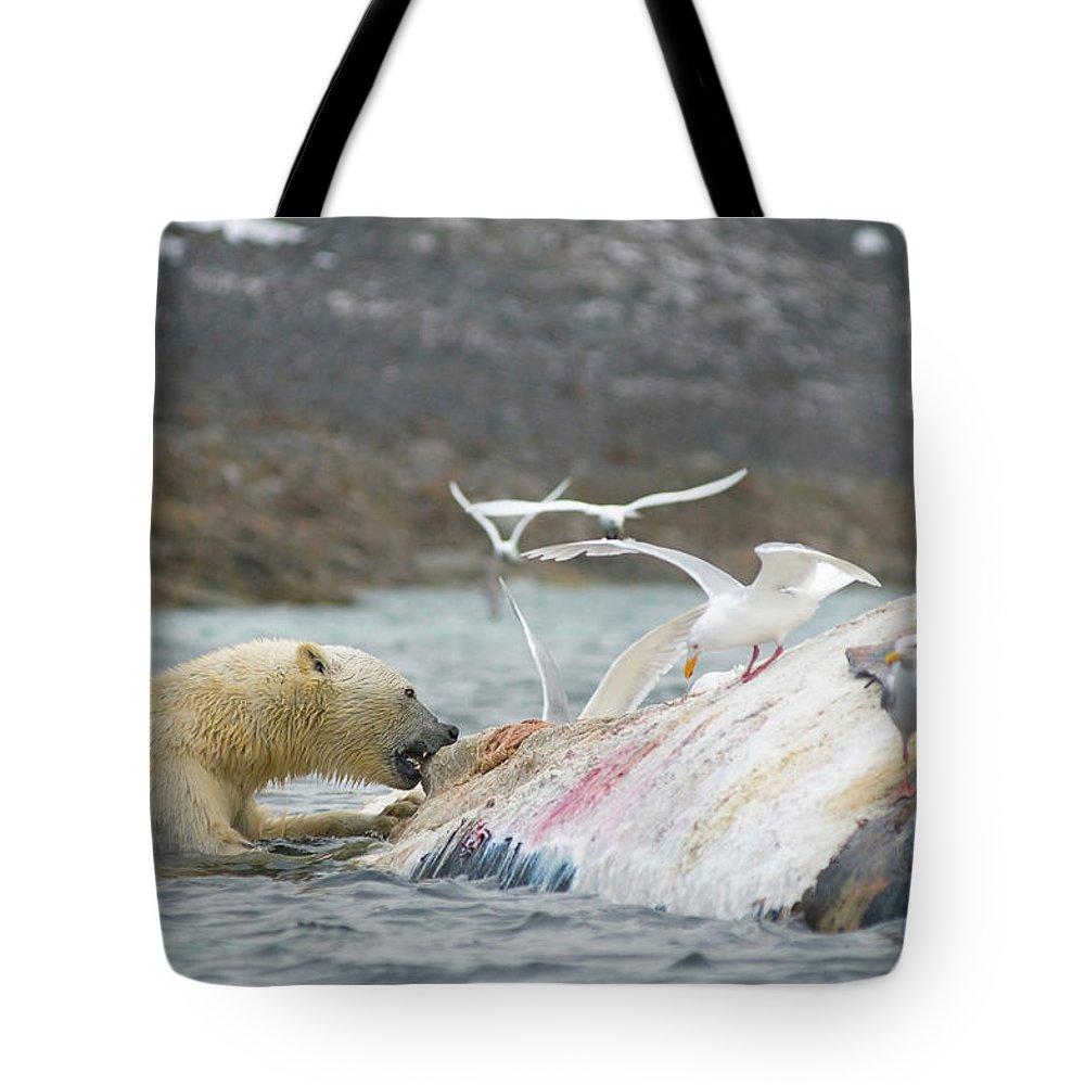 Adult Tote Bag featuring the photograph An Adult Polar Bear Ursus Maritimus by Steven J. Kazlowski / GHG