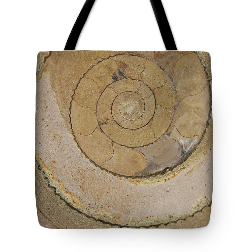 Ammonite Tote Bag featuring the photograph An Ancient Ammonite Pattern Vi by Jaroslaw Blaminsky