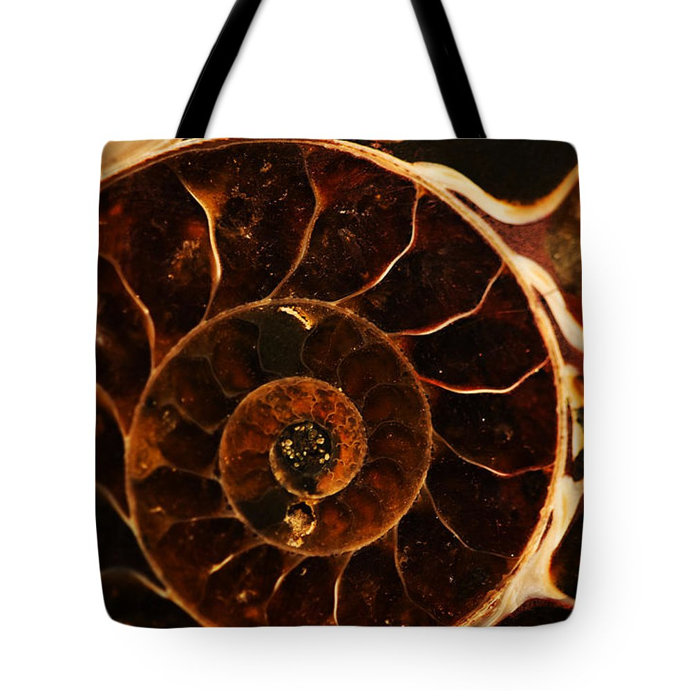 Ammonite Tote Bag featuring the photograph An Ancient Treasure IIi by Jaroslaw Blaminsky