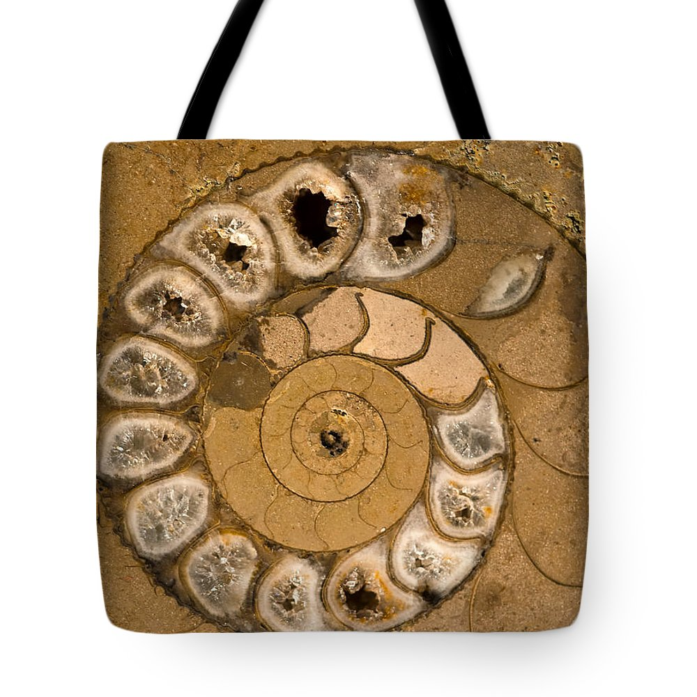 Ammonite Tote Bag featuring the photograph An Ancient Treasure V by Jaroslaw Blaminsky