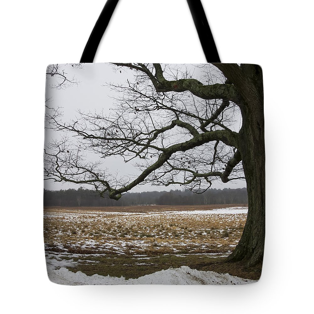 Tree Tote Bag featuring the photograph An Appleton Tree And Field In Winter by David Stone