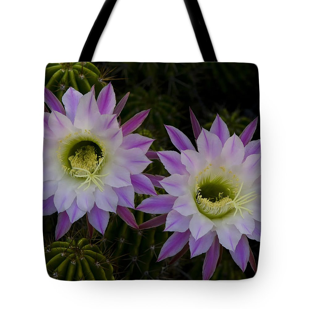 Echinopsis Tote Bag featuring the photograph An Early Summer Morning by Saija Lehtonen
