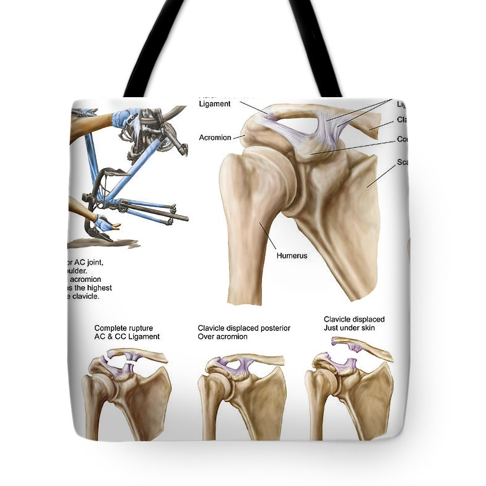 Anatomy Of Acromioclavicular Joint Tote Bag for Sale by Stocktrek Images