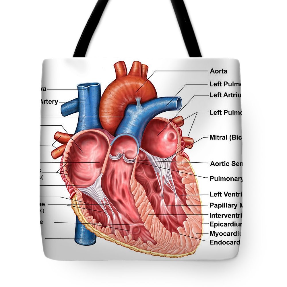 Anatomy Of Heart Interior Frontal Tote Bag For Sale By Stocktrek Images