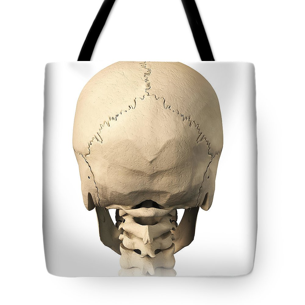 Anatomy Of Human Skull, Rear View Tote Bag for Sale by Leonello Calvetti