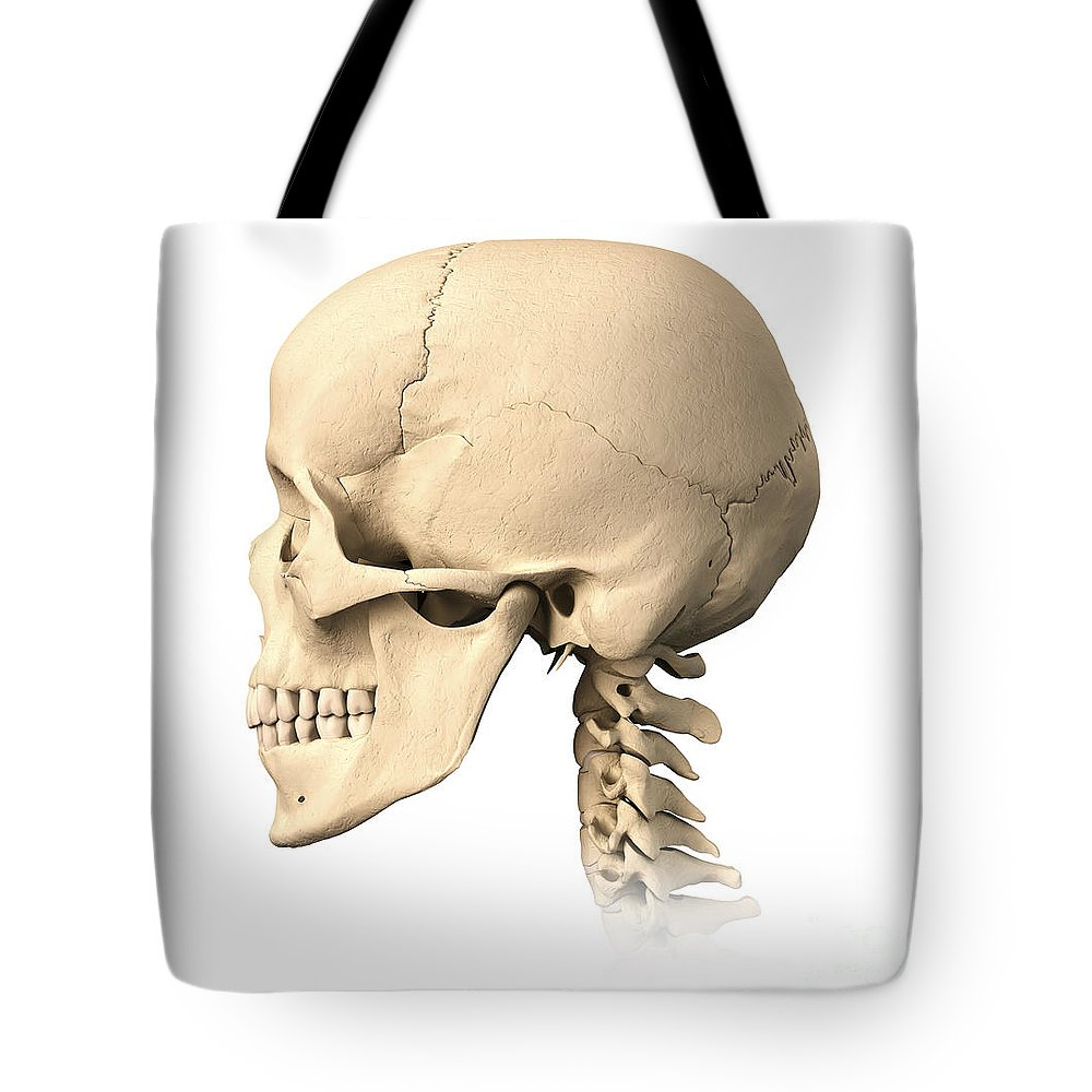 Anatomy Of Human Skull Side View Tote Bag For Sale By Leonello Calvetti