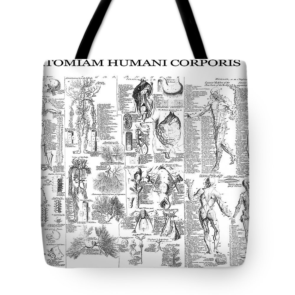 Anatomy Tote Bag featuring the digital art Anatomy Of The Human Body 1728 by Daniel Hagerman
