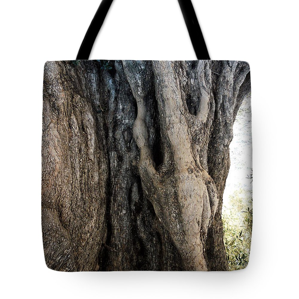 Colette Tote Bag featuring the photograph Ancient Old Fine Olive Tree 6 Mountain Spain by Colette V Hera Guggenheim
