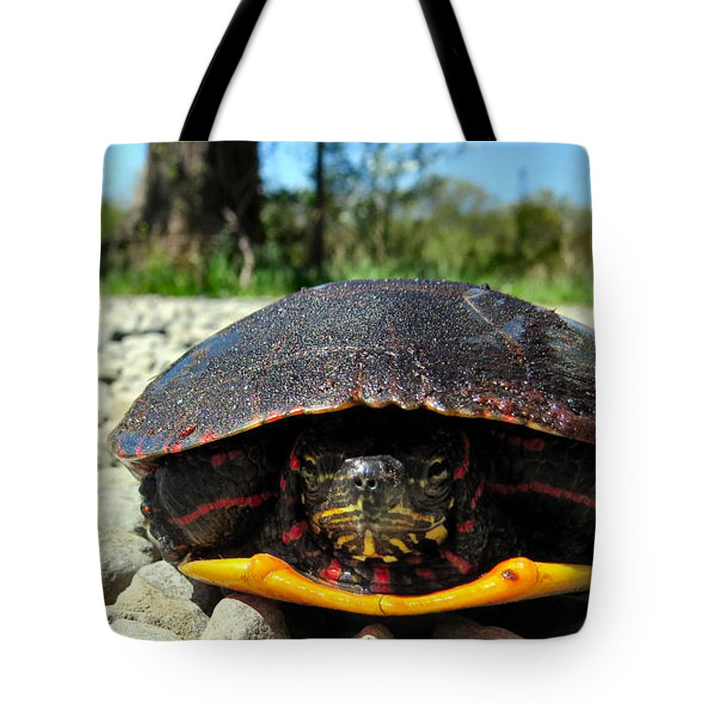 Turtle Tote Bag featuring the photograph And So I Wait by Art Dingo