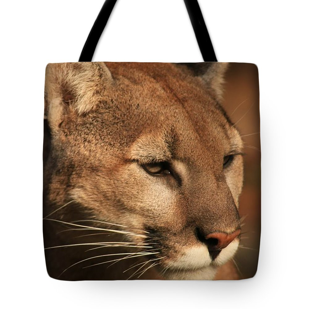 Cougar Tote Bag featuring the photograph Angle Of Pursuit by Laddie Halupa