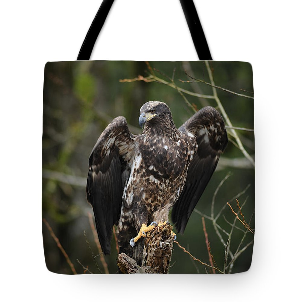Bald Eagle Tote Bag featuring the photograph Angle's Wings by Randy Giesbrecht