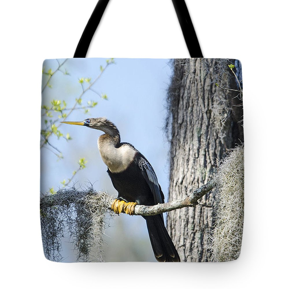 Tote Bag featuring the photograph Anhinga And Spanish Moss by TJ Baccari