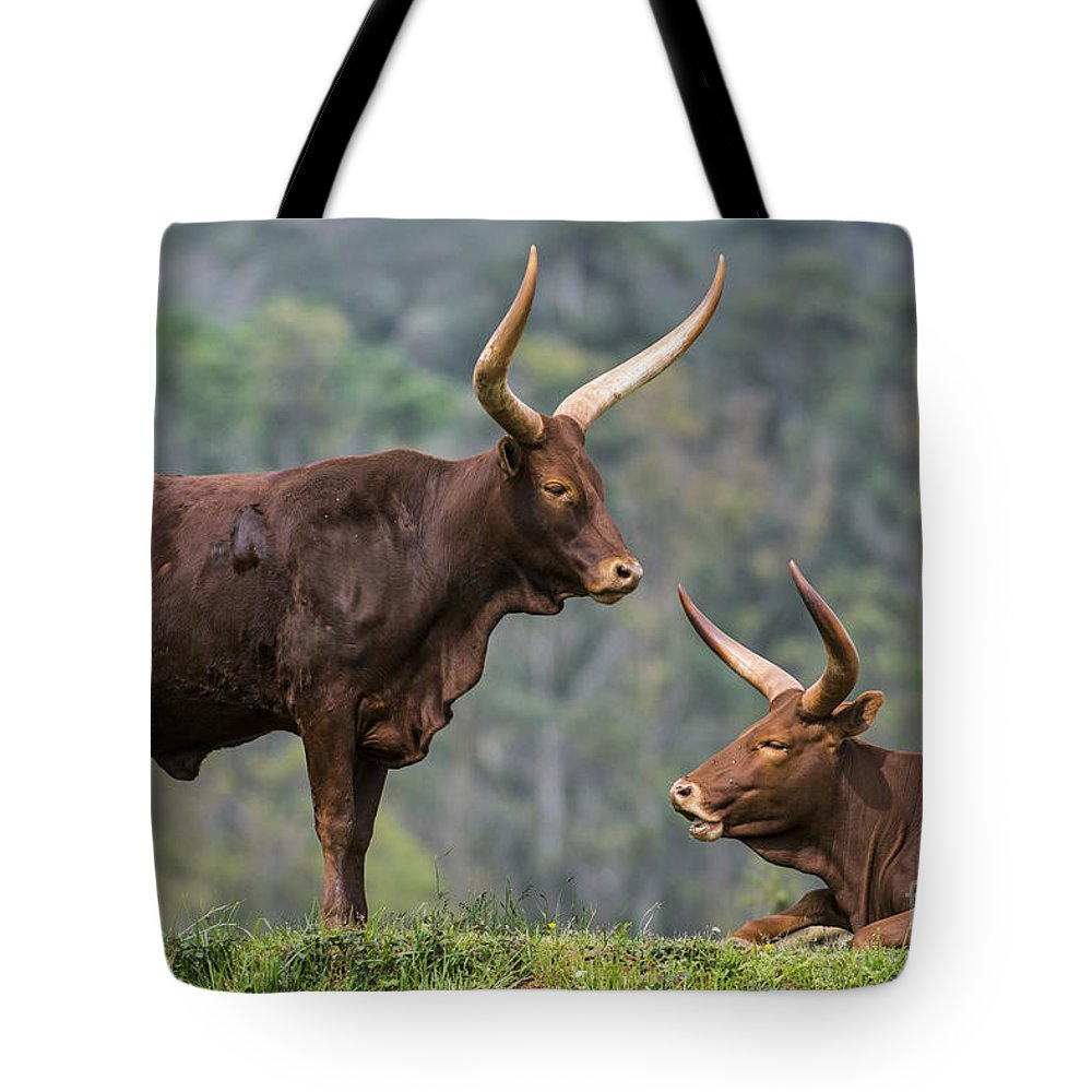 Watusi Tote Bag featuring the photograph Ankole Longhorn 2 by Arterra Picture Library