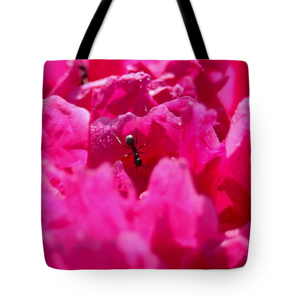 Autumn Tote Bag featuring the photograph Ant by David Matthews