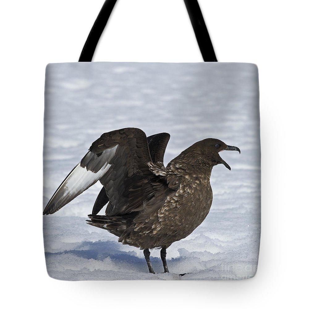Festblues Tote Bag featuring the photograph Antarctic Predator.. by Nina Stavlund