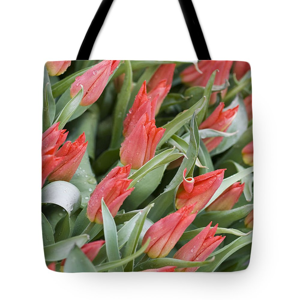 Anticipation Tote Bag featuring the photograph Anticipation by Juli Scalzi