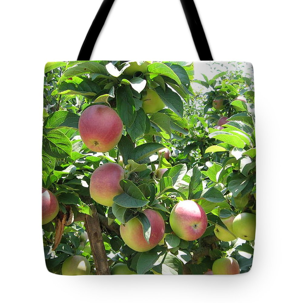 Apples Tote Bag featuring the photograph Apples At Gizdich by Laura Hamill