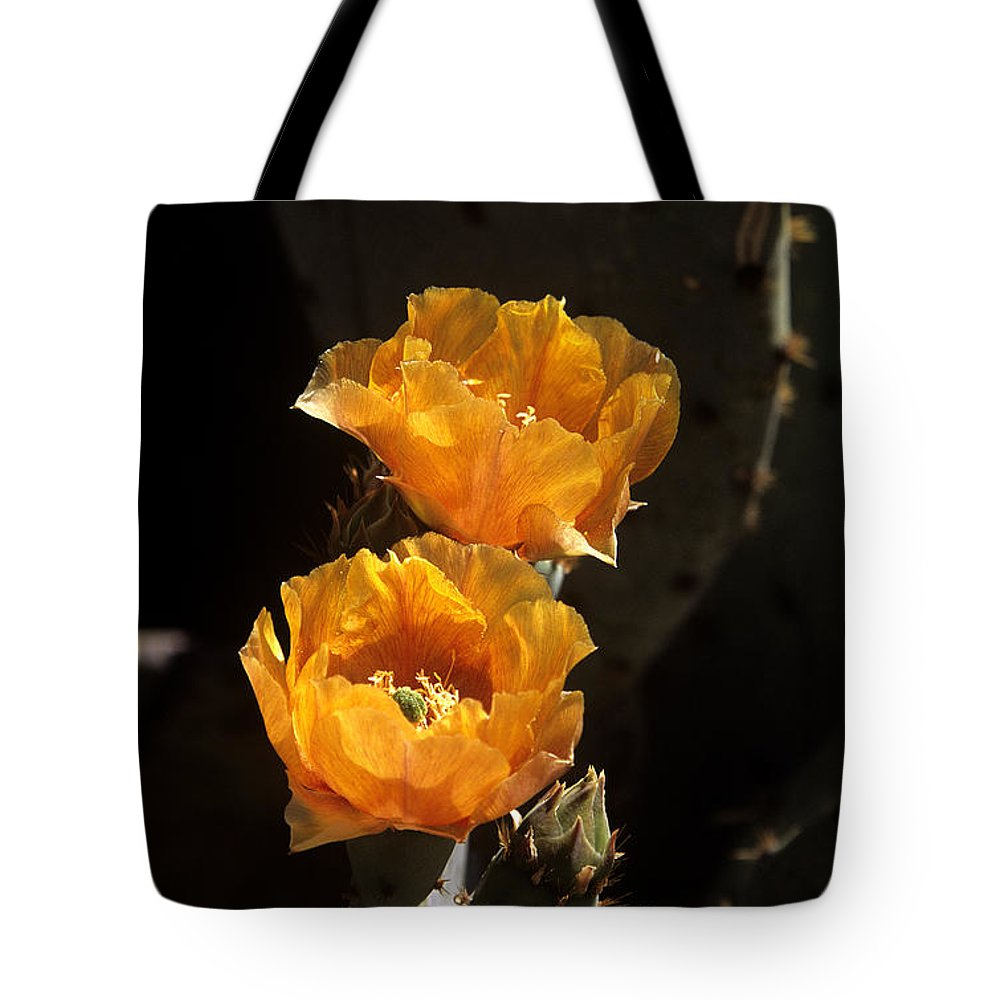 Cactus Tote Bag featuring the photograph Apricot Blossoms by Kathy McClure