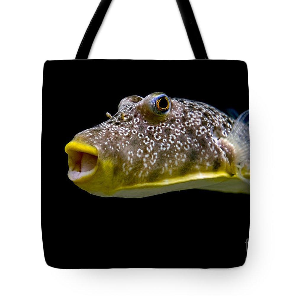Fish Tote Bag featuring the photograph Aquarium Fish by David Arment