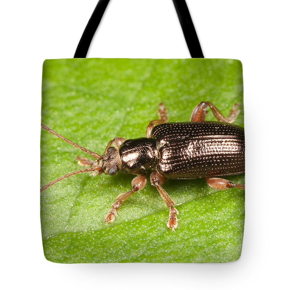 Clarence Holmes Tote Bag featuring the photograph Aquatic Leaf Beetle by Clarence Holmes