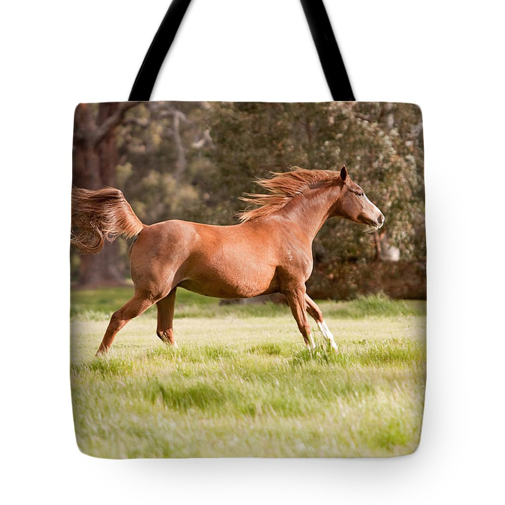 Arabian Horse Print Tote Bag featuring the photograph Arabian Horse Running Free by Michelle Wrighton