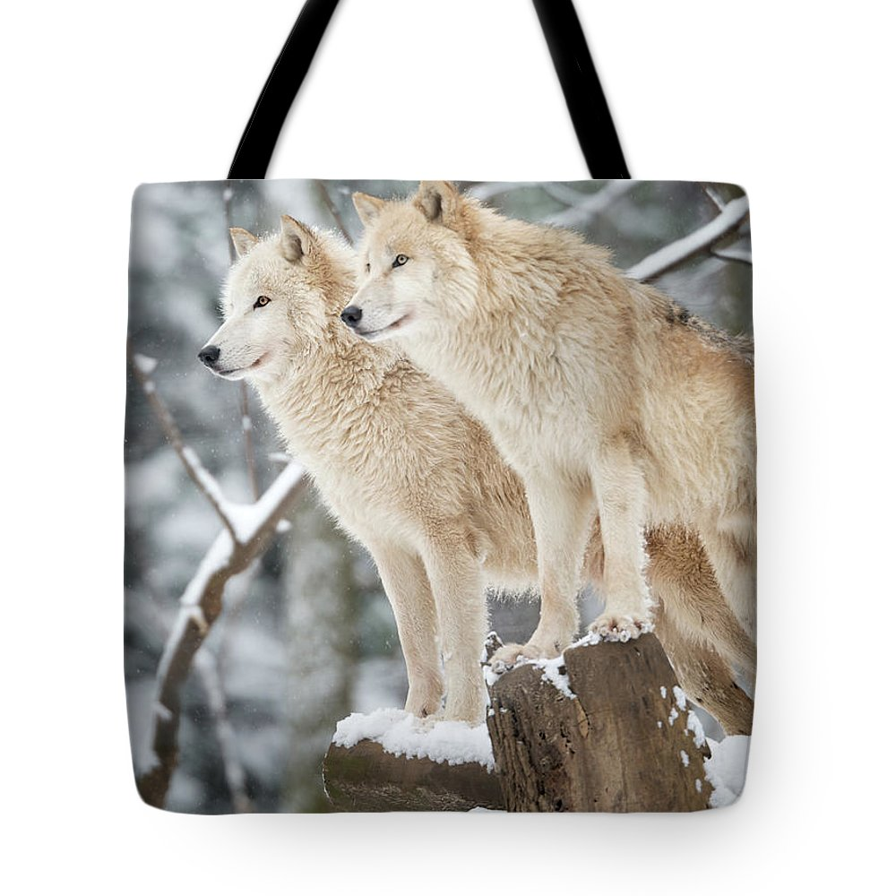 Snow Tote Bag featuring the photograph Arctic Wolves Pack In Wildlife, Winter by 4fr
