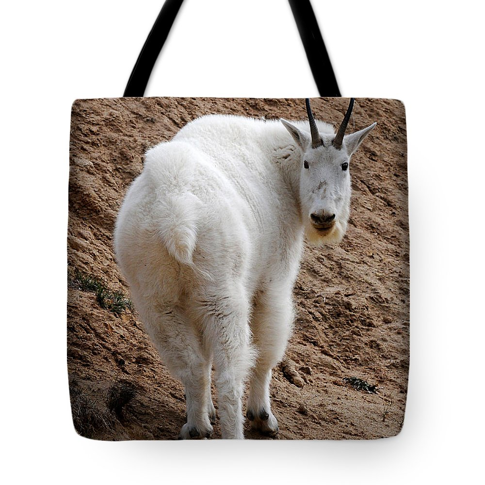 Wildlife Tote Bag featuring the photograph Are You Following Me by Vivian Christopher
