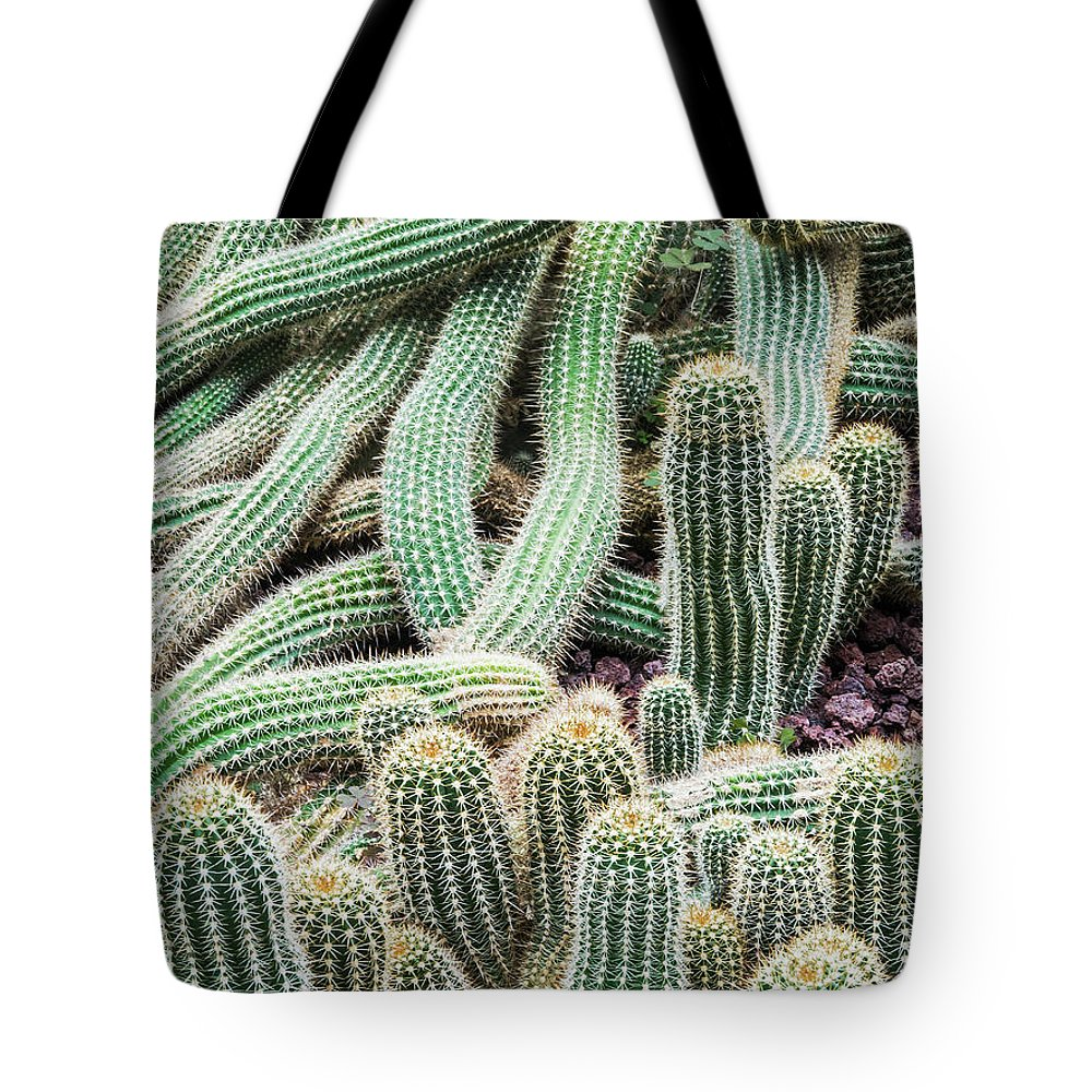 Heap Tote Bag featuring the photograph Argentine Giant Cactus by Andy Sotiriou