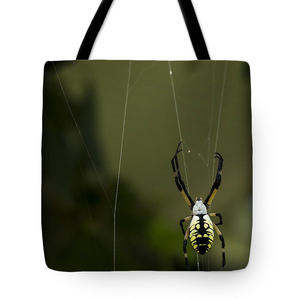 Argiope Aurantia Tote Bag featuring the photograph Argiope Aurantia by Heather Applegate