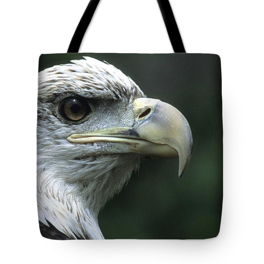 Eagle Tote Bag featuring the photograph Aristocratic Bald Eagle by Larry Allan