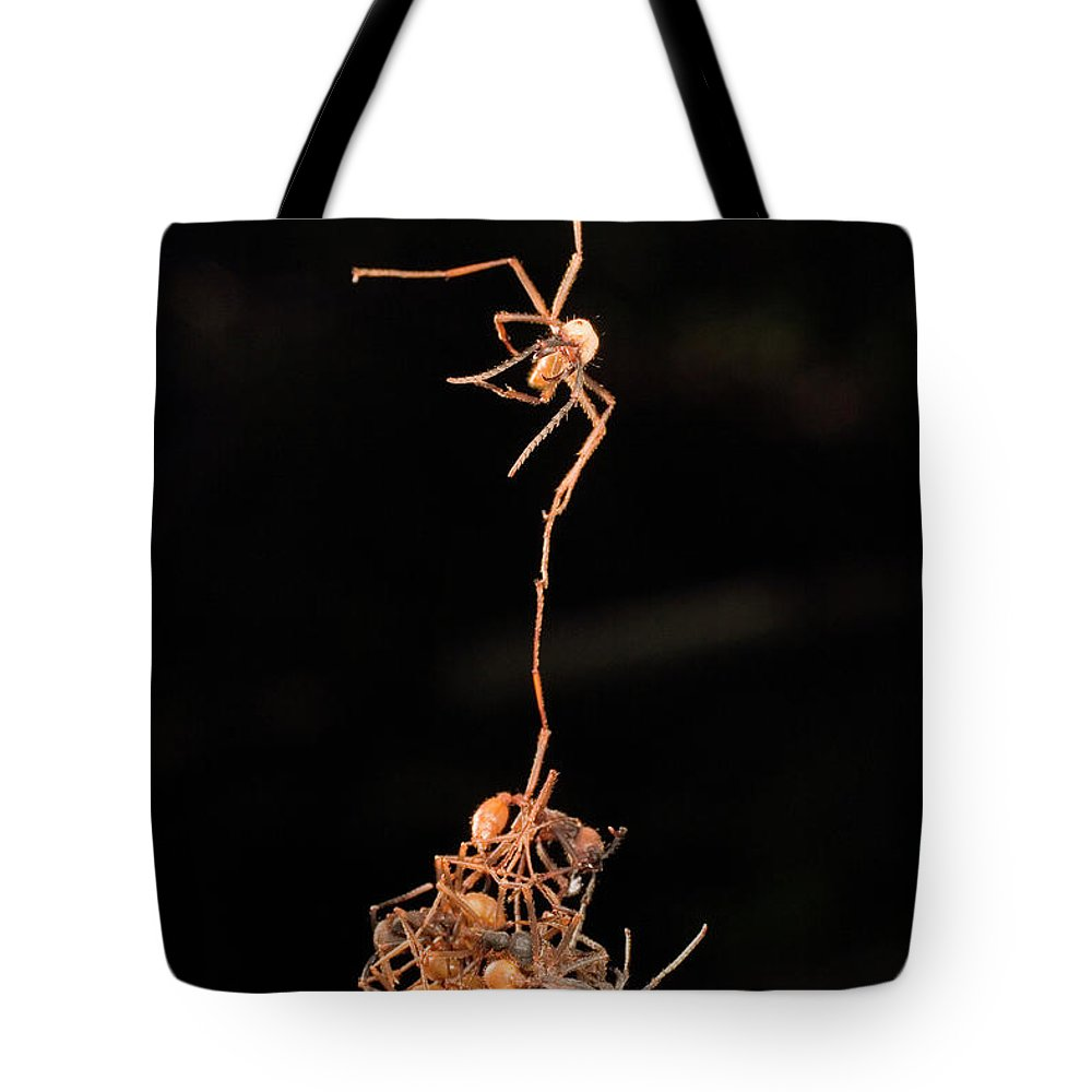 Army Ant Tote Bag featuring the photograph Army Ants Building Bivouac by Mark Moffett