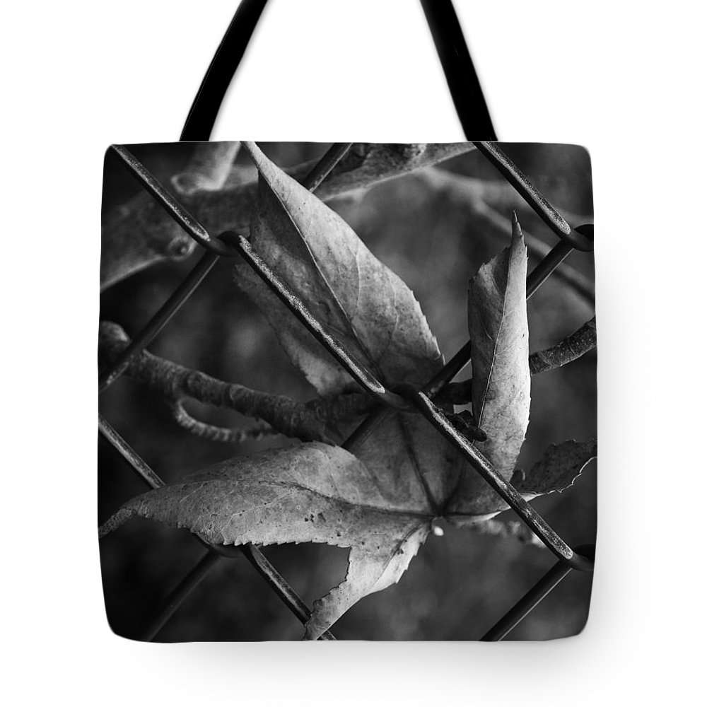Leaf Tote Bag featuring the photograph Around The Park by The Artist Project