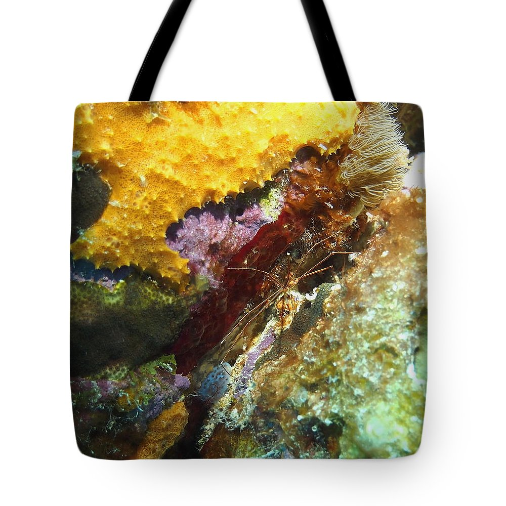 Nature Tote Bag featuring the photograph Arrow Crab In A Rainbow Of Coral by Amy McDaniel