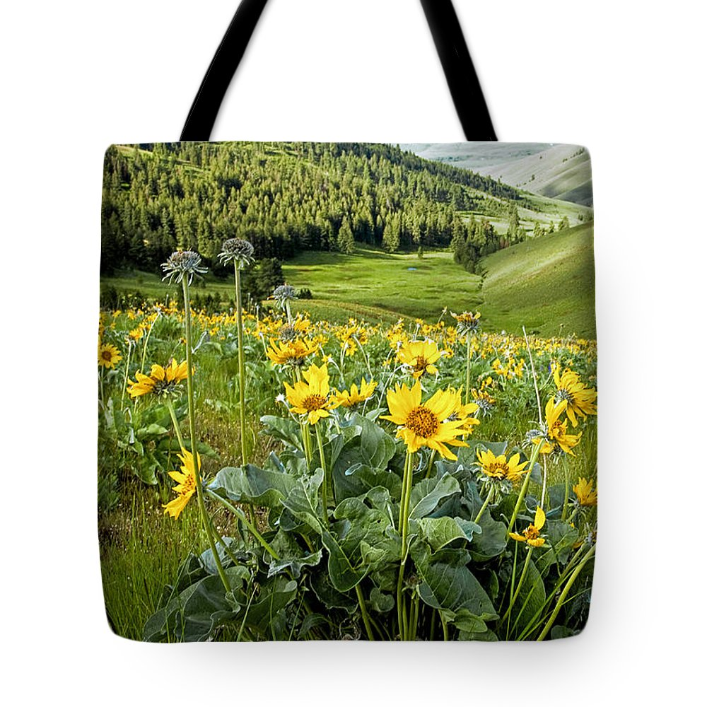 Flowers Tote Bag featuring the photograph Arrow Leaf Balsam Root by Jack Bell