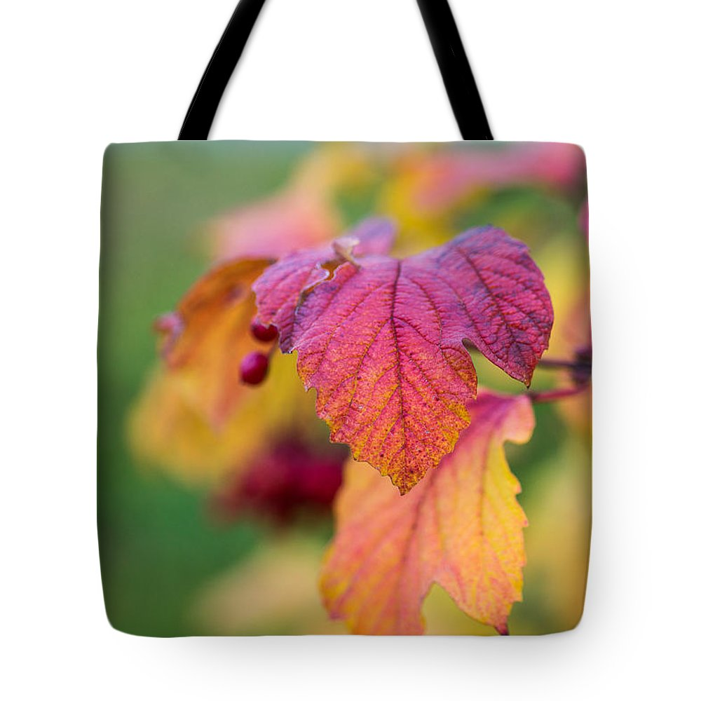 Agriculture Tote Bag featuring the photograph Arrowwood Leaf - Featured 3 by Alexander Senin