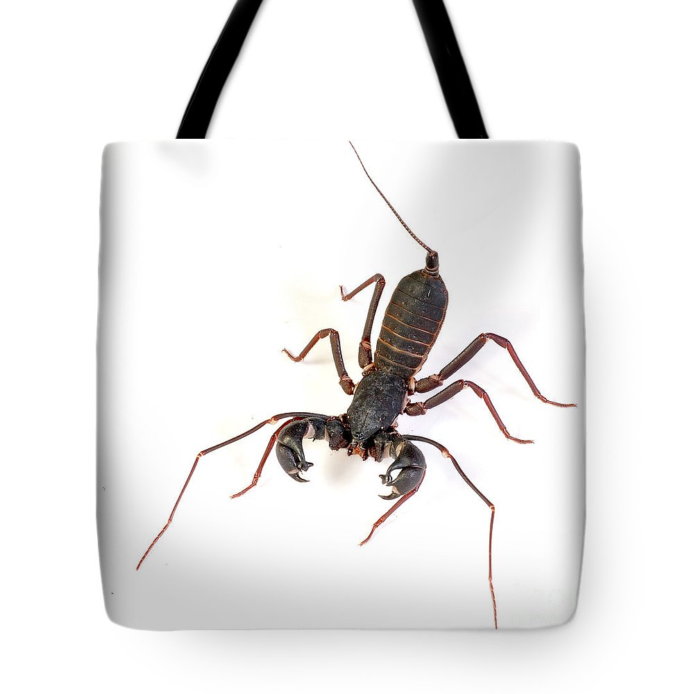 Asian Whipscorpion Tote Bag featuring the photograph Asian Whipscorpion by Francesco Tomasinelli